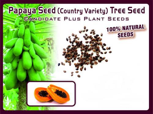 Papaya Fruit Seed