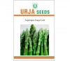 Imported Asparagus Seed