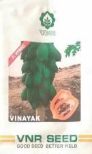 Hybrid Papita Seeds