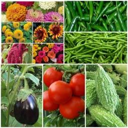 kitchen Garden Seed kit