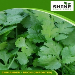 Kitchen Garden Coriander Seeds