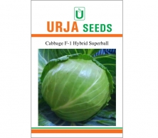 F1 Hybrid Cabbage Seed