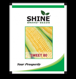 HYBRID SWEET CORN SEEDS