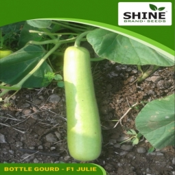 Hybrid Kitchen Garden Bottle Gourd Seed